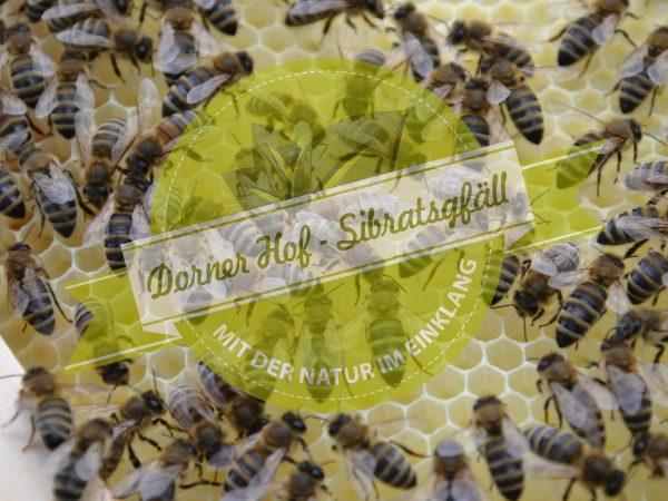 bienen.honig