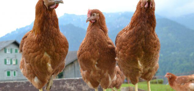 hühner.ei