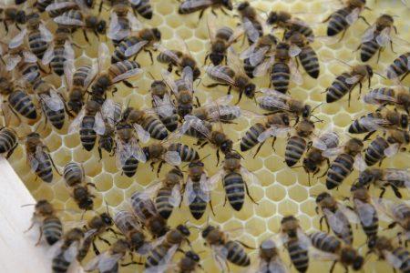 Dürfen wir vorstellen: Unsere honig.bienen