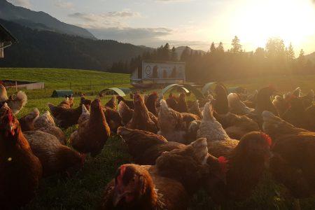 hühner.ei und mobiles Wohnen